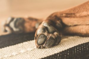 How to Keep Your Dog from Damaging Hardwood Floors